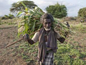 Bauernomade trägt seine Ernte