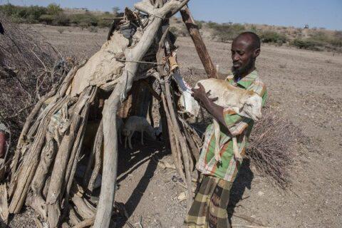 Interview mit Aden Ali, 40, Nomade im Gebiet Gegana Burteli im Distrikt Mille