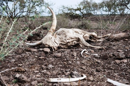 Livestock are dying of starvation - EN