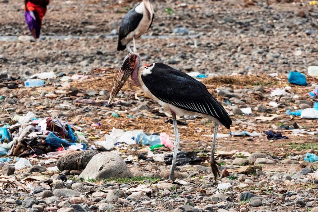 Aasfresser durchstöbert den Müll