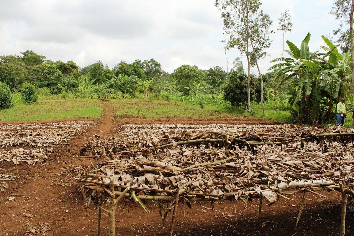 Baumschule in Äthiopien | Menschen für Menschen