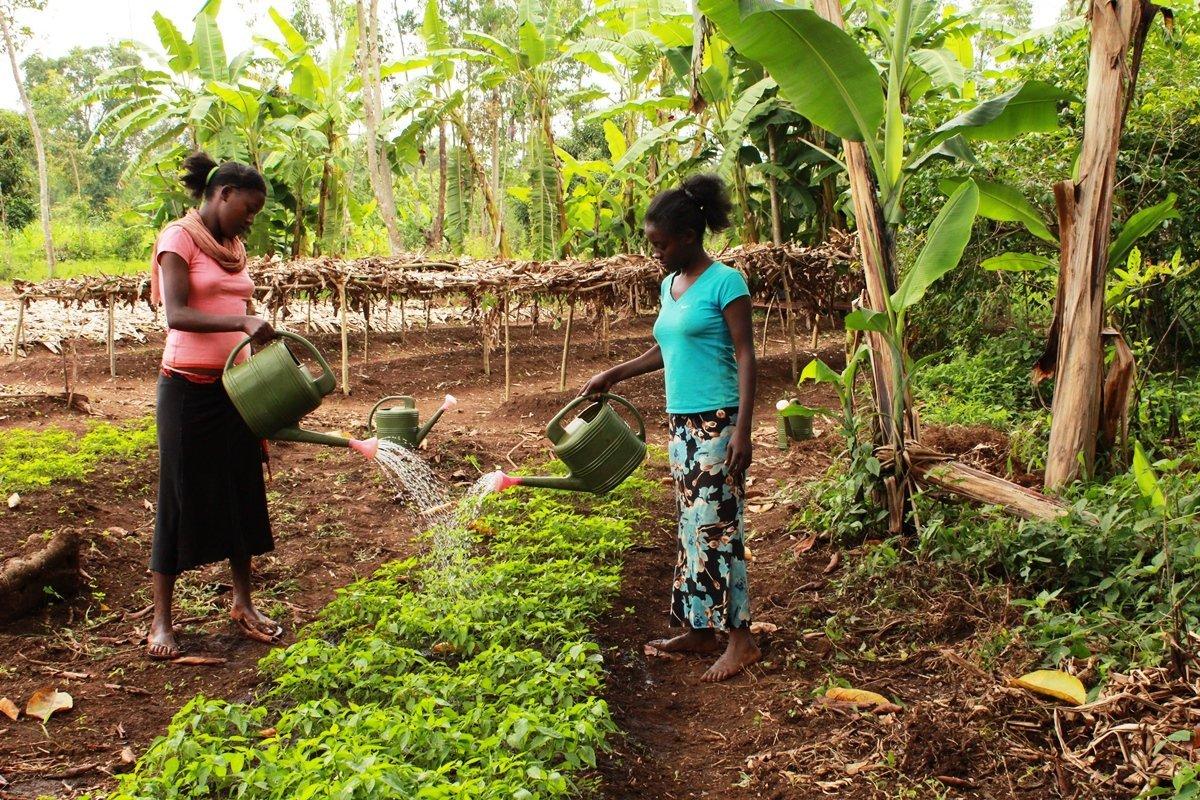 Frauen giessen pflanzen | Menschen für Menschen