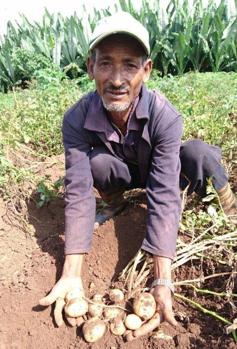 Bauer zeigt Kartoffel Ernte