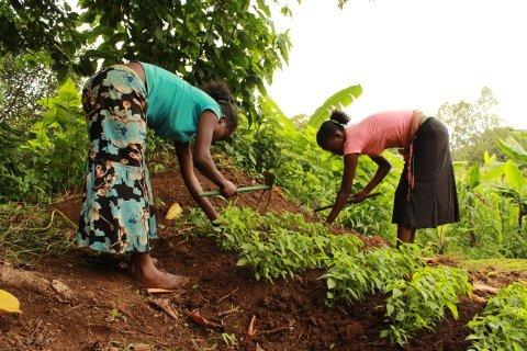 Unterstützung für Bauern