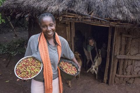 Äthiopien: Herkunft des Kaffees