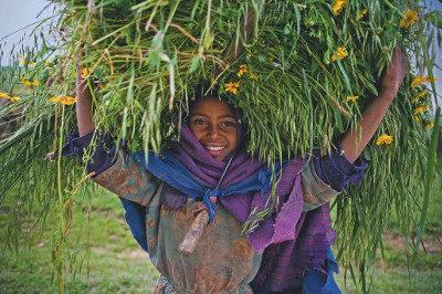 Äthiopisches Neujahr: Meskel-Blumen