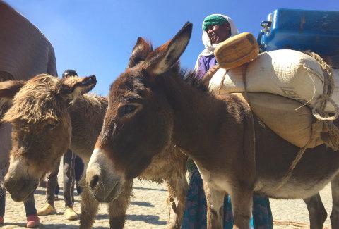 Esel in Äthiopien: Eine Entlastung für die Frauen