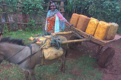 Esel in Äthiopien: Spediteurin mit Transportfahrzeug