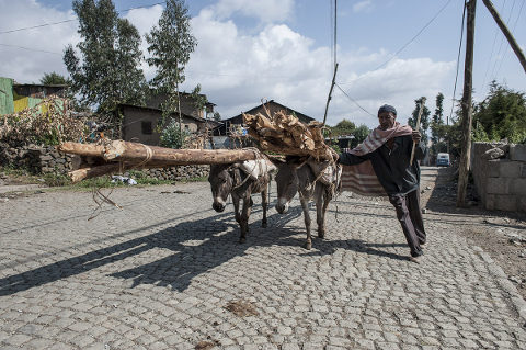 Esel in Äthiopien: Schwere Last