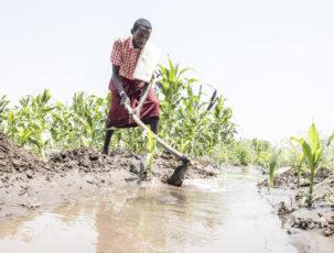 Die Wüste lebt: Bauern bei der Arbeit