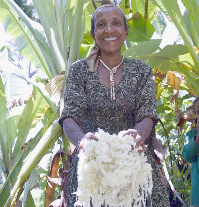 Ensete: Rohstoff für Kotscho-Brot
