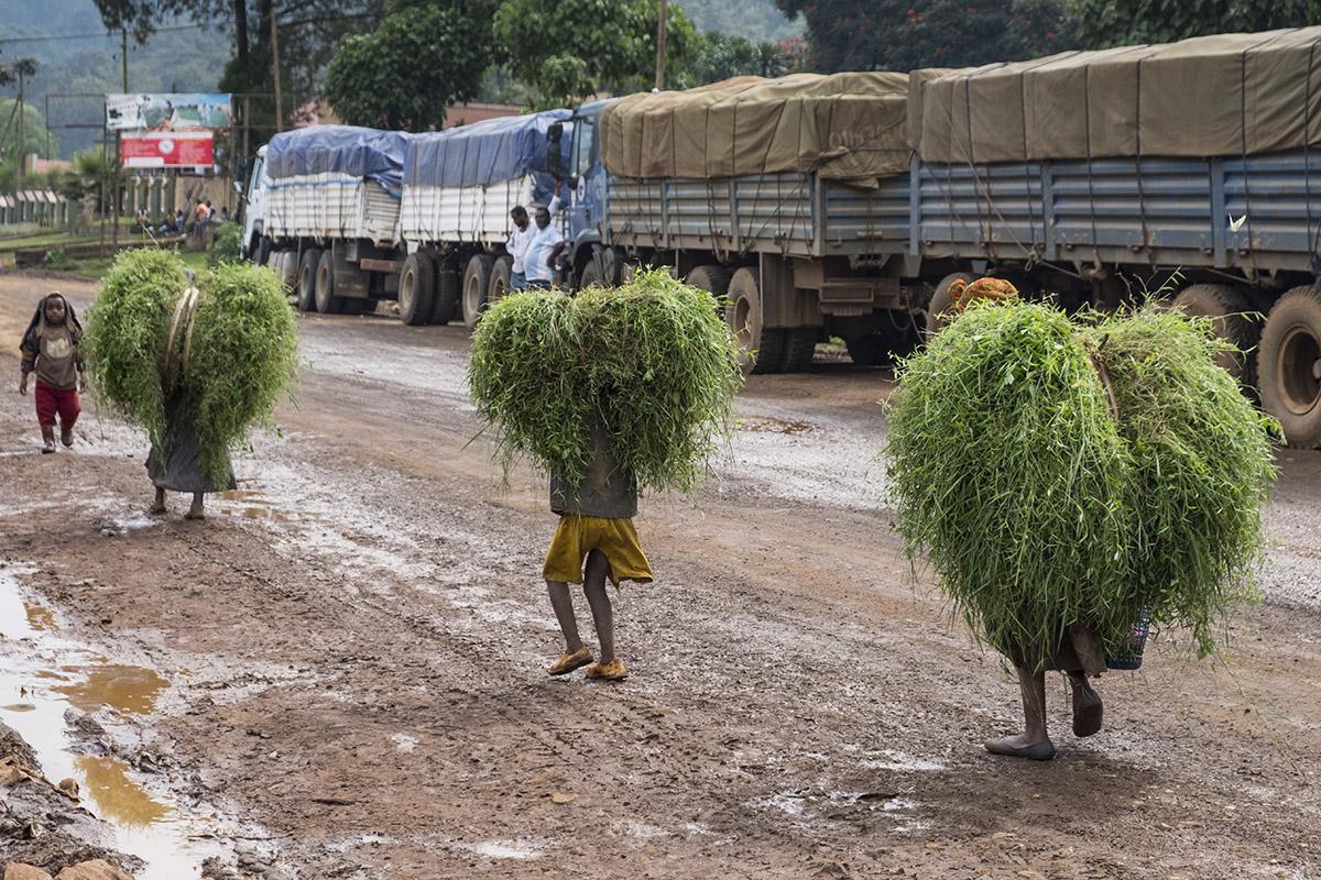 Transport von Viehfutter   Stiftung Menschen für Menschen