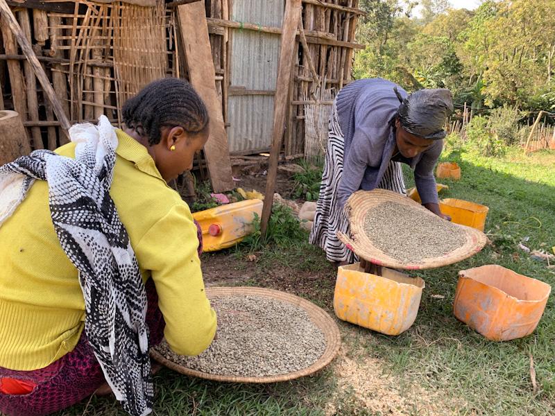 Frauen beim Sortieren von Kaffeebohnen | Stiftung Menschen für Menschen