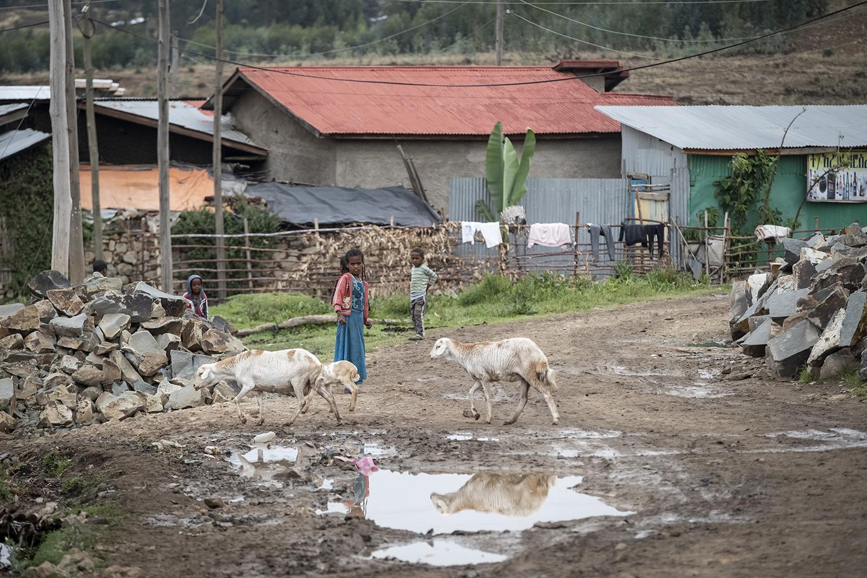 Viele Zuzügler vom Land: Strassenszene in Debre Berhan