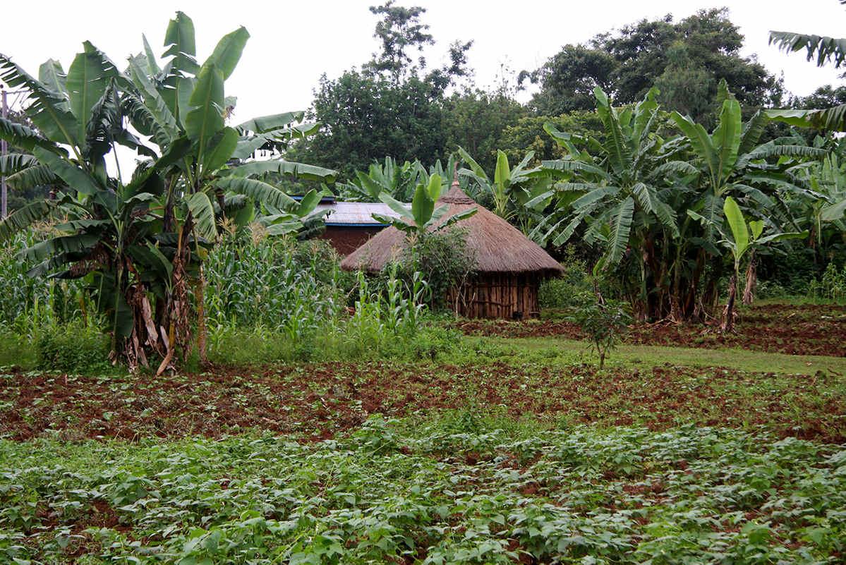 Abaya im Süden von Äthiopien – eigentlich ein fruchtbarer Landstrich
