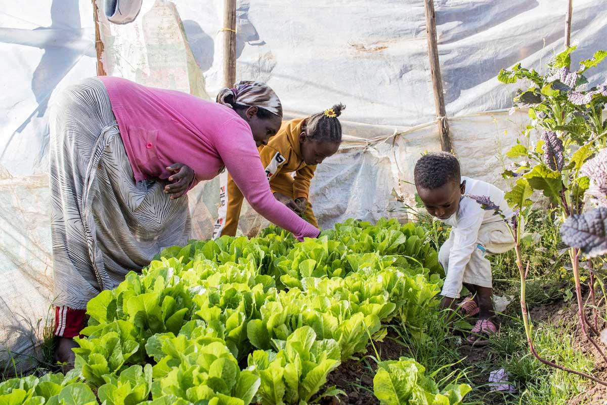 Nach einer Schulung baut die Familie rund um ihre Sozialwohnung Gemüse an