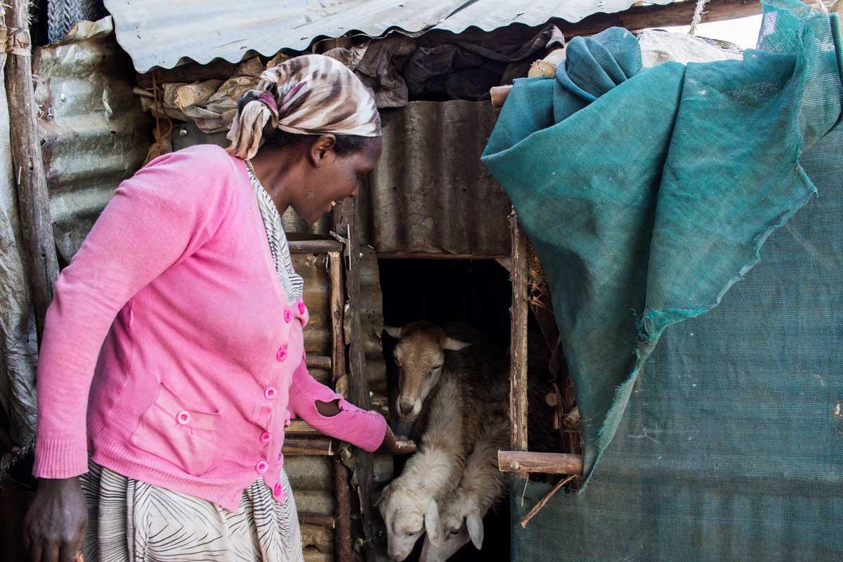 Dank eines Mikrokredits besitzt die Familie Schafe, die auf dem Markt einen guten Preis erzielen