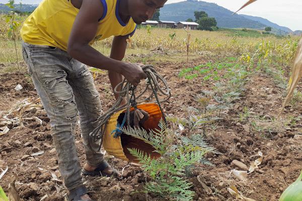 Bauer pflanz einen Baum