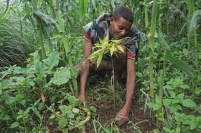 Junge pflanzt Baumsetzling